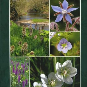 The Wildflowers of Offaly  1